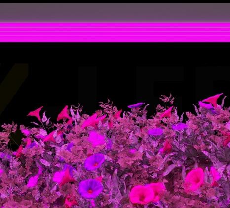 Подвесной светодиодный фитосветильник Z-LED 150ВТ (600x240x40) LFS-150
